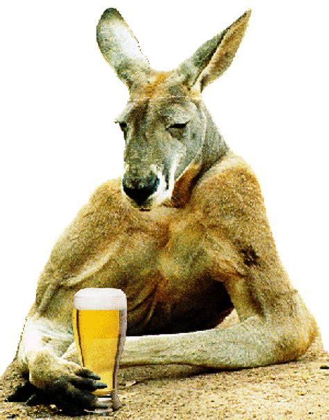 sad kangaroo