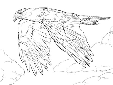 peregrine falcon diving coloring pages coloring pages