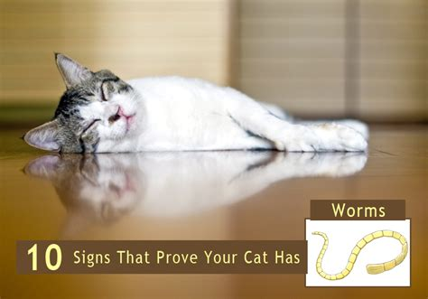 how do you if your has worms 10 signs that prove your cat has worms