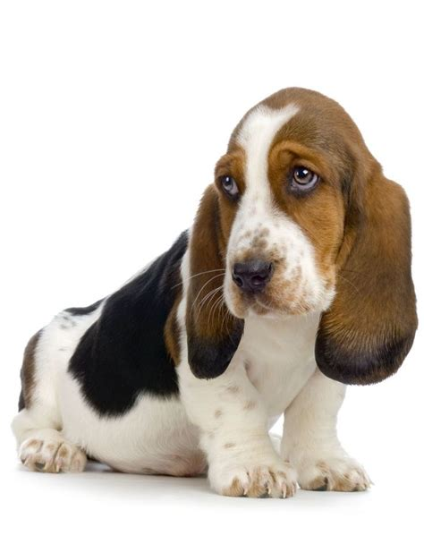 low maintenance breeds top 10 low maintenance breeds for busy owners top inspired