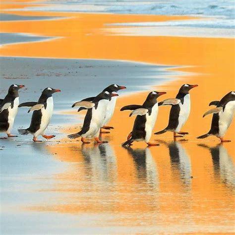 understanding a photograph penguin 17 ideas about penguins on baby penguins penguin nails and penguin nail art