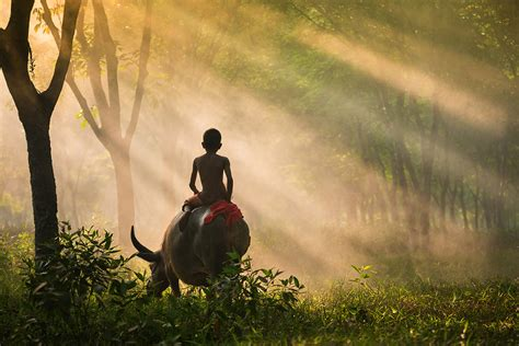 beautiful pictures 2016 sony world photography awards 2016 ten beautiful images
