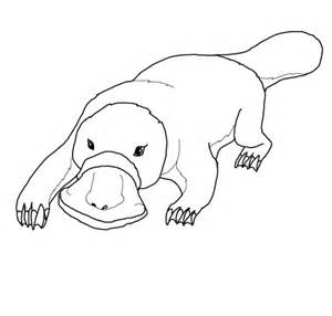 Click Platypus Coloring Page For Printable Version sketch template