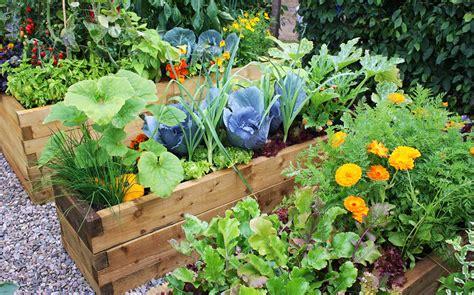 creare un orto in giardino quanto fa bene coltivare un orto in ufficio lifegate