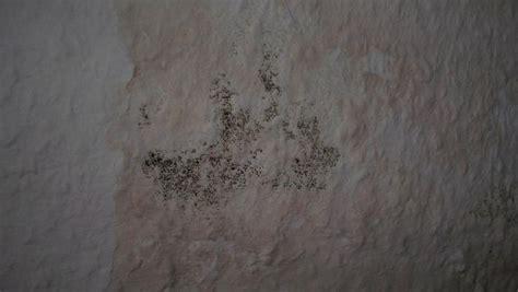 Wie Gef Hrlich Ist Schimmel In Der Wohnung 4501 by Schimmel An Der Wand Entfernen Schimmel Entfernen An Wand
