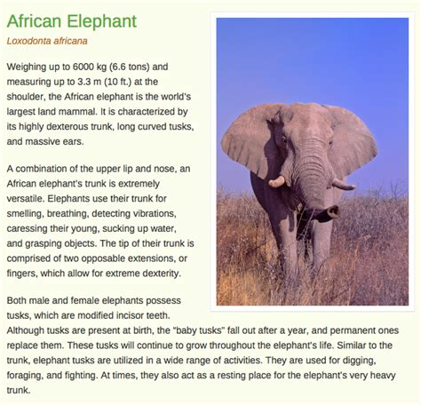 Population Report Writing by Elephants Resources For Ks1 And Ks2 Non Chronological Reports Resources Asian