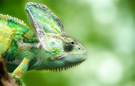 imágenes de animales insectívoros biolog 237 a archivos animales