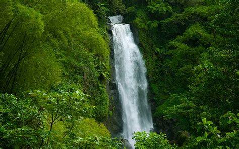 pisos la selva del c selva geografia y medio ambiente
