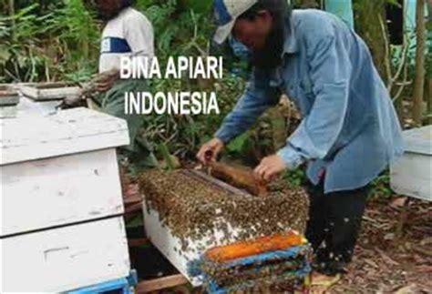 Madu Propolis Bina Apiari madu murni peternakan lebah madu bina apiari the