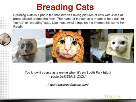 Cat Breading Meme - cat memes 2011 2012