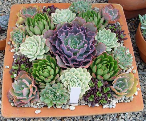 succulents plants adaptations for kids 100 succulents plants adaptations for kids plants