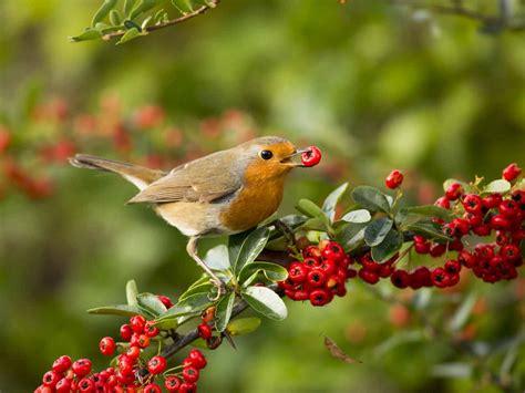 garden bird photography tips saga