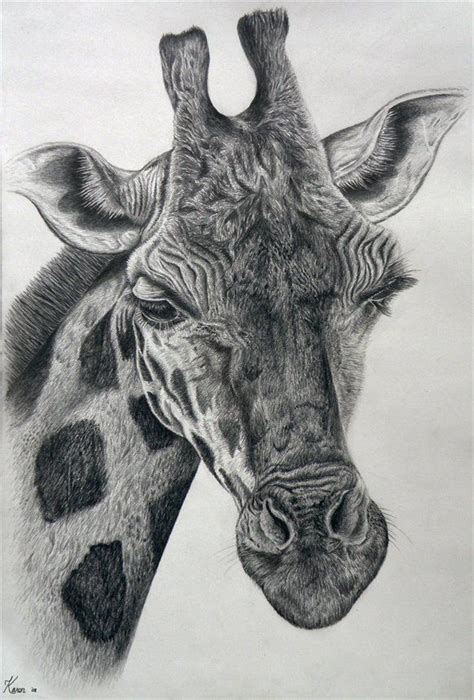 Big 5 Sketches by 1000 Ideas About Baby Giraffe On
