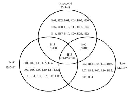venn diagram analysis venn diagram analysis showing up or regulated