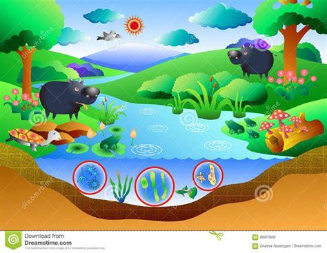 ecosystem cartoons illustrations vector stock images