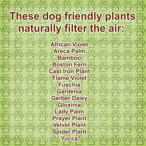 dog friendly house plants pin by charlotte reed on create pet home pinterest