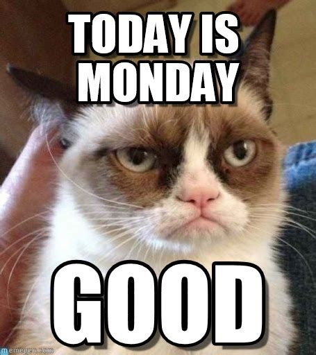 Grumpy Cat Monday Meme - today is monday grumpy cat reverse meme on memegen