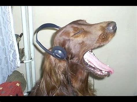sounds to make dogs howl dogs howling to compilation new