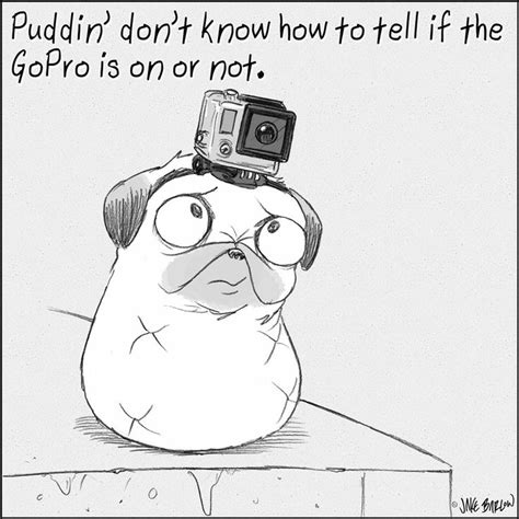 puddin the pug 17 best images about puddin on pug pug and gluten
