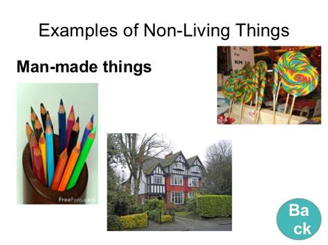 living things non living things living things and non living things learning object