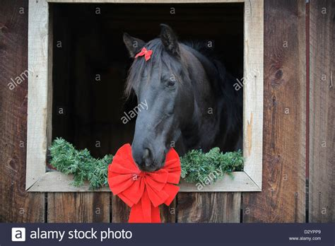 christmas decorating with horses barn decorations www indiepedia org