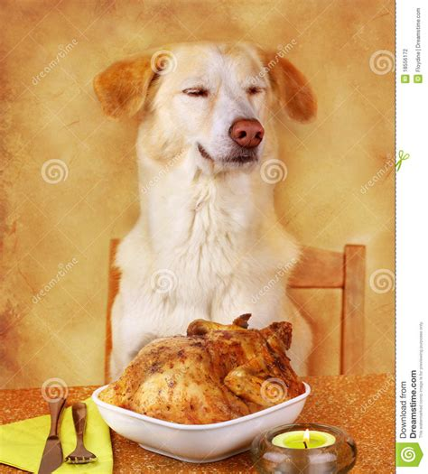 puppies or fried chicken likes fried chicken stock photography image 18556172