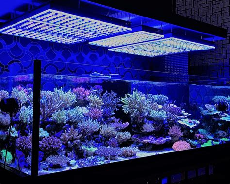 Lu Led Aquarium Air Laut orphek japan reef tour meeting pacific japan co orphek