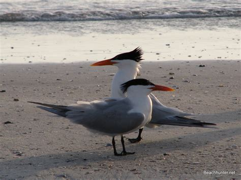 Find Florida Types Of Seagulls In Florida Search Engine At Search