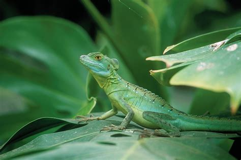 animals and plants that live in the tropical rainforest may half term events beautiful biodiversity the living