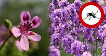 flowers that keep mosquitoes away 8 wondrous plants to keep mosquitoes away nutrition