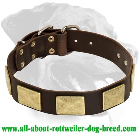 rottweiler leather collars buy leather rottweiler walking collar brass plates