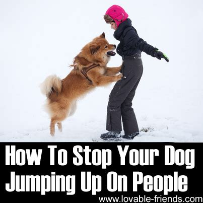how to a to stop jumping on how to stop your jumping up on tutorial lovable friends
