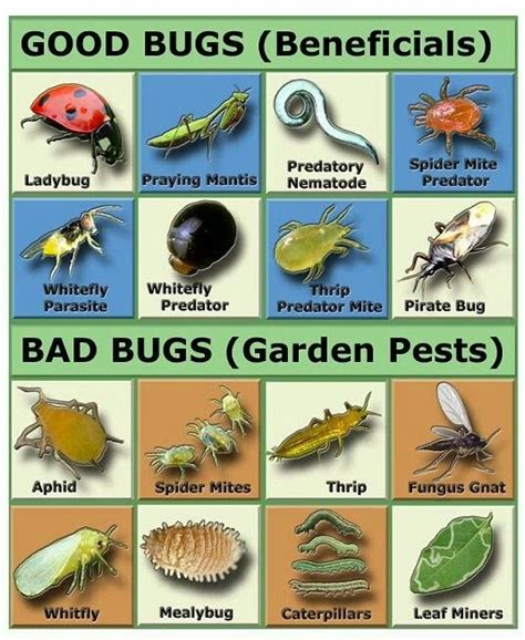 types of garden pests the the bad the gardening tips