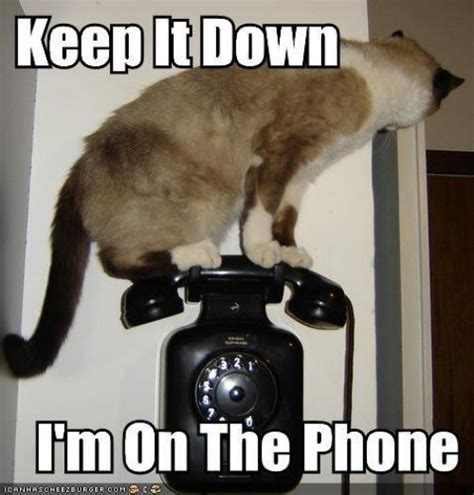 Telephone Meme - funny animals are even funnier with these captions 27 pics