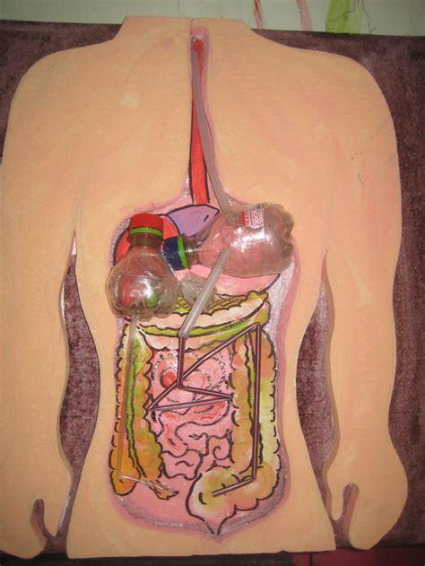 como hacer una maqueta del aparato digestivo de un gusano de tierra 80 best maquetas images on pinterest