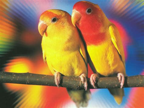 imagenes de love birds top 10 best kind of pet parrots