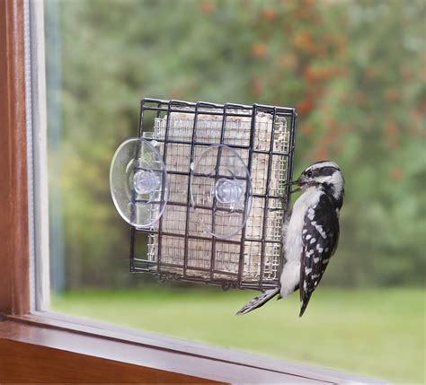window mount suet feeder wiring diagrams wiring diagram