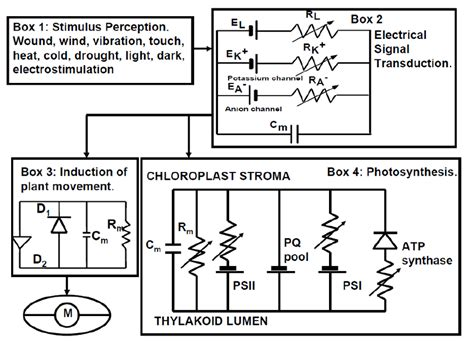 biological electrical resistor biologically closed electrical circuits in mimosa pudica