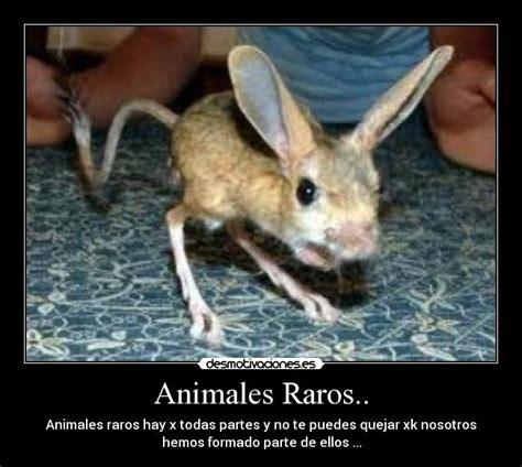 imagenes increibles de animales raros animales raros desmotivaciones