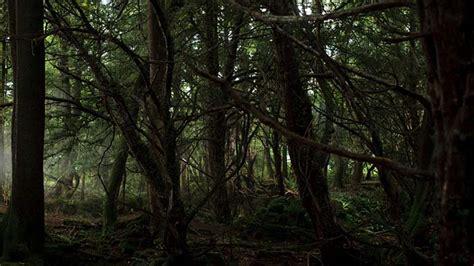 in darkling wood darkling woods merlin wiki bbc tv series