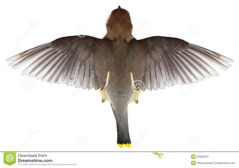 Birds Top by Flying Bird Top View Of Flight Wings Royalty Free Stock