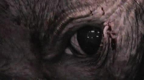 imagenes satanicas fuertes los documentales m 225 s fuertes de la historia