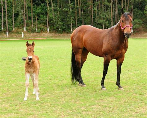 burro cojiendo pony cojida por caballo mujer cogida por caballo pony mujer