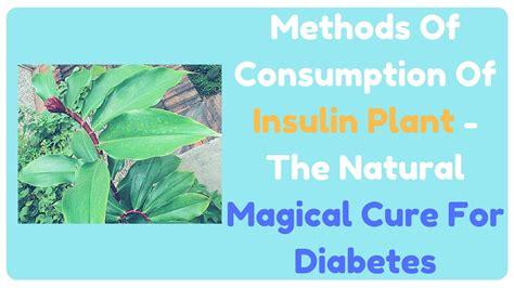Diskon Teh Herbal Diabetes Diabetea Insuline methods of consumption of insulin plant the