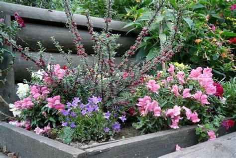 fiori da aiuola la finestra di stefania aiuola con fiori colorati la