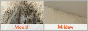 mold vs mildew differences