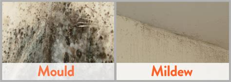 how to clean mildew in bathroom mold vs mildew differences