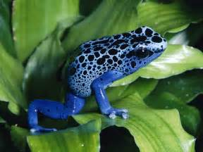 frog from colors frog beautiful skin colors animals wiki
