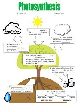 photosynthesis flowchart photosynthesis flowchart photosynthesis flowchart and