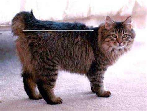 Cara Agar Kucing Tidak Hamil Lagi   Anak ABG Cantik
